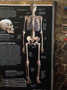 Skull Anatomy, Movie Posters, Movies, Art, Art Background, Films, Film Poster, Kunst, Cinema