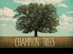 Champion Trees of Arkansas documentary.
