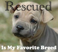 Rescued is my favorite breed. #adoptdontshop #rescuedogs