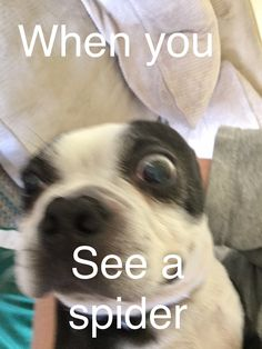 When Athena's kids see a spider Funny Dog Pictures, Funny Pics, Funny Memes, Funny Cute, Hilarious, Funny Animals, Cute Animals, Relatable Posts, True Feelings