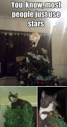 Your Cat, as a Tree Topper