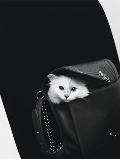 Cats By Karl Photograph by Karl Lagerfeld; W magazine