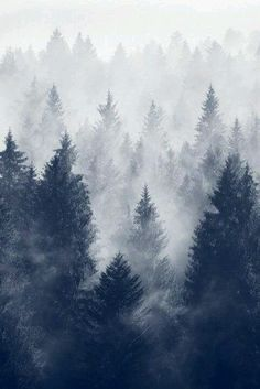 The gradient shown with the snow and the graphic lines of the trees (also shows power)