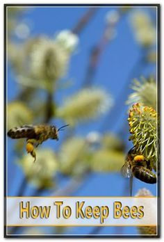 Bee pollen is frequently described as nature's most complete food. Human intake of pollen is applauded in the Scriptures other religious publications and old Chinese as well as Egyptian texts.