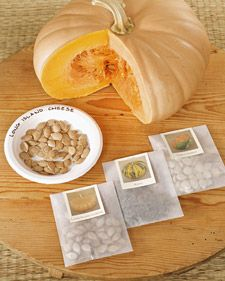 Martha shows you how to save seeds, a perfect Christmas present for gardeners and a great way to save money on plants.