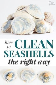 How to Clean Seashells the Right Way - Decor by the Seashore