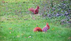Zwei Eichhörnchen auf der Wiese - Jahreszeiten - Galerie - Community