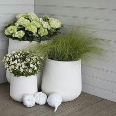 Create a blooming late summer - Floral Garden Ideas Container Flowers, Container Plants, Container Gardening, Scandinavian Garden, Outdoor Patio Designs, Pot Jardin, Pot Plante, Easter Flowers, Deco Floral
