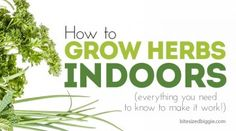 How to Grow an Herb Garden - Bite Sized Biggie How To Make Diy, Make It Simple, Burp Cloth Patterns, Bag Patterns, Indoor Vegetable Gardening, Fabric Book Covers, Diy Dog Collar, Pattern Weights, Herbs Indoors