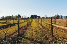 Vineyards  #vscocam #vscogrid
