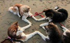 """""""「ファミコン 十字キー」で画像検索したら犬が出てきた"""""""