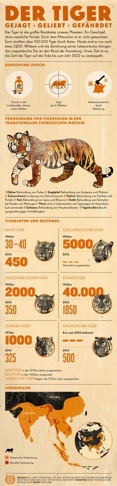 Tiger haben keine natürlichen Feinde. Doch dem Menschen sind sie nicht gewachsen. Mehr unter: www.wwf.de/tiger