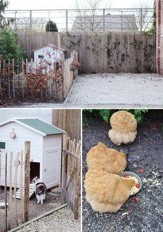 sweet hen house