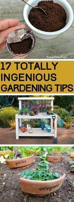 Gardening, Gardening Tips, Gardening Hacks, Easy Gardening TIps, Popular Pin, Vegetable Gardening, Gardening for Beginners, Beginner Gardening Tips, Beginner Gardening Hacks. #gardeningforbeginners
