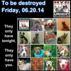 We are these 15 dogs lifeline for a bright  loving future. DOn't let tonight be their last night on earth.  Please share EVERYWHERE. We only have tonight.   To rescue a Death Row Dog, Please read this: http://urgentpetsondeathrow.org/must-read/  To view the full album, please click here:    https://www.facebook.com/media/set/?set=a.611290788883804.1073741851.152876678058553type=3
