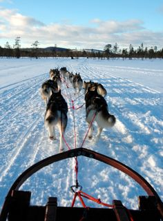 View of Alaska from a dog sled