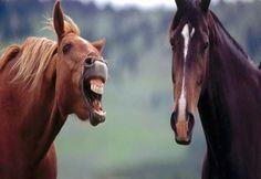 Bio Orbis: Olhar a boca de um cavalo dado...