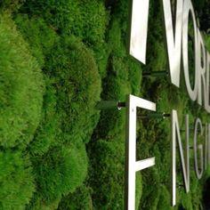 pflanzenwand aus immergr nen nat rlichen pflanzen pinterest gr ne w nde pflanzenwand und w nde. Black Bedroom Furniture Sets. Home Design Ideas