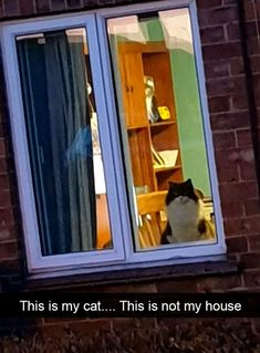 Cat Snaps: Bringing Everlasting Peace To The World Cat Snaps: Bringing Everlasting Peace To The World Cat Shaming, Funny Cats, Funny Animals, Cute Animals, Animal Fun, 9gag Funny, Funny Minion, Crazy Cat Lady, Crazy Cats