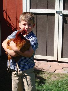 I haven't read this yet, but I think owning chickens should always be done on a informed basis. Pros & Cons of Raising Backyard Chickens