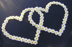 Daisy Hearts - so cute! Flower Words, My Flower, Flower Art, Flower Power, Daisy Love, Flower Rangoli, Heart Images, I Love Heart, Little Flowers
