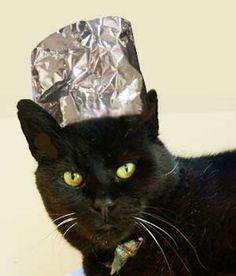 cat-with-tin-foil-hat --- Cute kittens pics http://livkul.com/top-62-cute-kitten-pics/