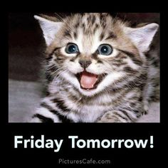 Happy Friday have a good Thursday day greeting kitten Cat