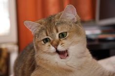 Cats - 17 Pictures | Funny Cat | DomPict.com