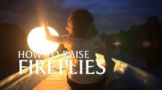 How to raise (real) fireflies. Shot with real fireflies in Kuala Selangor, Malaysia. Fireflies are quickly disappearing for many environmental reasons. This short film, deliberately imitating prestigious documentary series like BBC Life on Earth, shows how we can raise fireflies at home, to thicken the firefly colonies under threat. | Vimeo