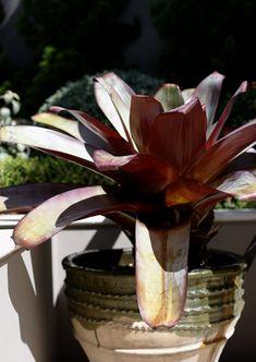 Glazed Turkish Dagar featuring Bromeliad Garden Design, Planter Pots, Landscape, Green, Flowers, Landscape Paintings, Backyard Landscape Design, Landscape Designs, Royal Icing Flowers