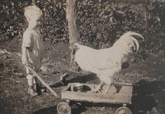 Little boy pulling a pet rooster on a wooden wagon Vintage Children Photos, Vintage Pictures, Old Pictures, Vintage Images, Old Photos, Antique Photos, Vintage Photographs, Vintage Farm, Martial