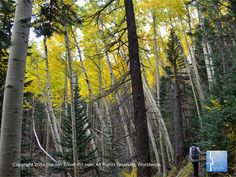 Amazing #fall foliage along the Bear Jaw trail in #Flagstaff, Arizona - a definite must-do during the spectacular fall season!