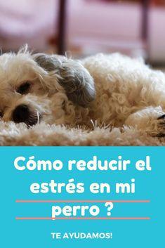 te enseñamos los síntomas , prevención y tratamiento de ellos :) Instagram, Dogs, Animals, Pets, Animales, Animaux, Pet Dogs, Doggies, Animais