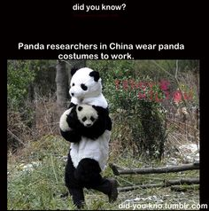 """Why is this so funny? It looks like the dude is just casually stealing a panda. And the panda is like, """"Mommyyyy?"""""""