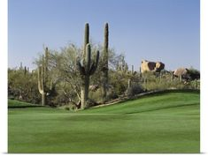Poster Print Wall Art Print entitled Saguaro cacti in a golf course, Troon North Golf Club, Scottsdale, Maricopa County, Arizona, None