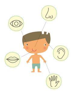 Voir, entendre, toucher, sentir… Voilà ce que vous faites en permanence ! Notre nez, nos yeux, notre bouche récupèrent des informations, envoyées par la suite directement au cerveau. On appelle cela : utiliser ses sens. Nous en avons 5 : la vue, l'ouïe, l'odorat, le goût et le toucher. Mais comment fonctionnent-ils ? Kids Learning Activities, Teaching Science, Teaching Kids, French Teacher, Teaching French, Pre School, Animation, Explorer, Ms