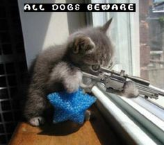 Cute Cat Pictures With Sayings | funny-kitty-picture-sniper-kitten-cat-holding-rifle-saying-dogs ...