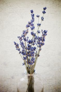Lavender by Nicole S. Young on 500px