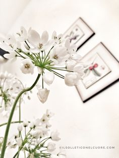 Aglio selvatico, aglio orsino Aglio, Place Cards, Place Card Holders, Garden, Garten, Gardens, Tuin, Yard