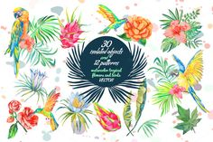 60% OFF TROPICAL SET by Elizaveta on @creativemarket
