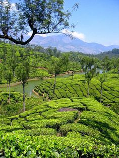 The tea plantations around Munnar. The highest tea plantations in the world are in this region. And the views are simply incredible! I love to trek through the plantations and the hills, one of the most beautiful days on my tours throughout South India.
