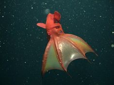 """Creepy Critters: Marine Life Surfaces for Halloween 