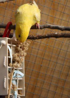 Canaillou - Perruches et perroquets