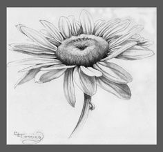 Daisy Pencil Drawing Pencil Drawing Of Leaves Pencil Sketch Drawing Daisy Flower Drawing, Flower Sketch Pencil, Pencil Drawings Of Flowers, Pencil Sketch Drawing, Flower Sketches, Flower Art, Art Drawings, Drawing Ideas, Wildflower Drawing