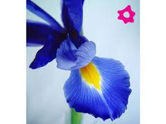 Resultado de imagen de flores hermosas azules