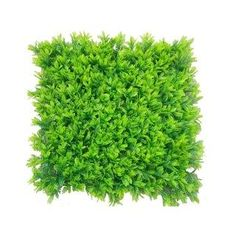 e-Joy Artificial Boxwood Hedge Greenery Panels Turf Color: Mimosa Boxwood Hedge, Boxwood Topiary, Evergreen Hedge, Artificial Topiary, Artificial Turf, Hedges, Tree Mulch, Wrought Iron Garden Gates, Fence Screening