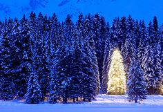 Arosa, Switzerland Decorated with festive lights, a lone tree glows at dusk near the popular winter resort town of Arosa.
