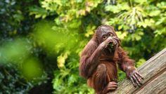 Dublin Zoo by Paul Madden