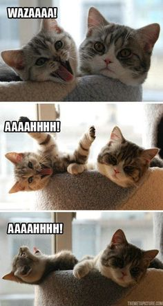 Funny cat is annoying his friend