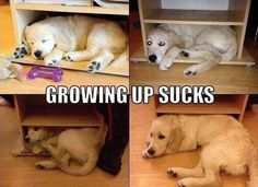 I totally know how that dog feels, I no longer fit into my favorite sleeping nooks either